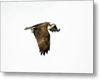 Phantom Of The Osprey Metal Print