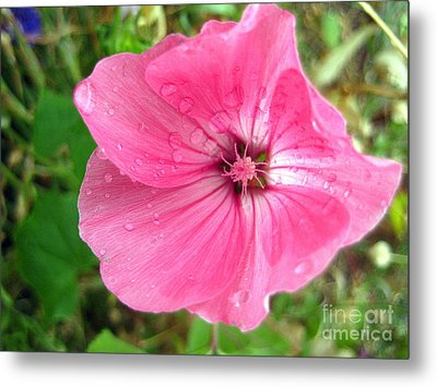 Metal Print featuring the photograph Rain Floral by Kathy Bassett
