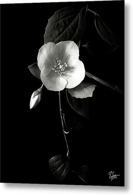 Philadelphus In Black And White Metal Print by Endre Balogh