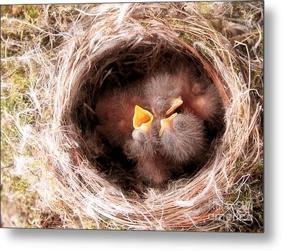 Phoebe Babies In Nest Metal Print by Angie Rea