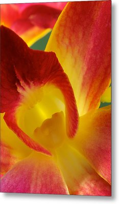 Photograph Of A Hope Orchid Flower Metal Print