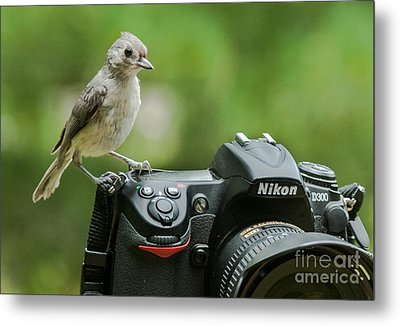 Photographer's Little Helper Metal Print