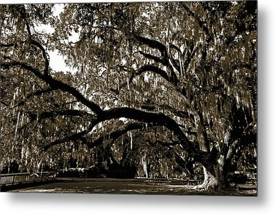 Metal Print featuring the photograph Picnic Under The Oak by DigiArt Diaries by Vicky B Fuller