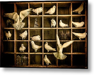 Pigeon Holed Metal Print by Chris Lord