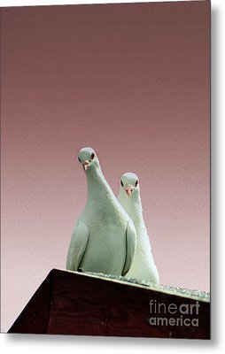Pigeons In The Pink Metal Print by Linsey Williams