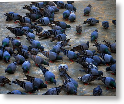 Pigeons Metal Print by Johnson Moya