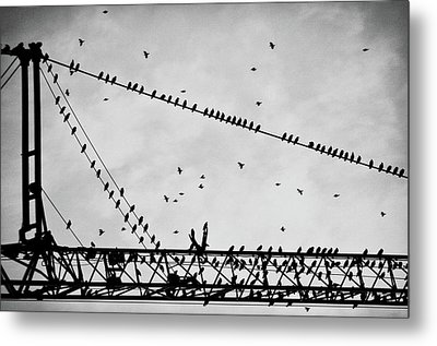 Pigeons Sitting On Building Crane And Flying Metal Print by Image by Ivo Berg (Crazy-Ivory)