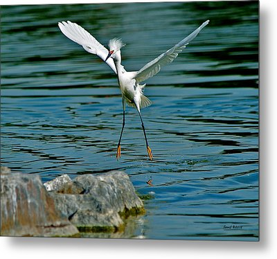 Pin Point Landing Metal Print