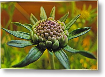 Metal Print featuring the photograph Pinchshin Bud by Debbie Portwood