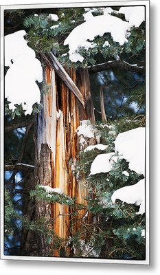 Pine Bark Metal Print by Lisa  Spencer