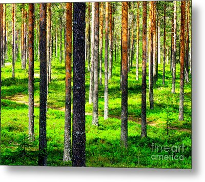 Pine Forest Metal Print by Pauli Hyvonen