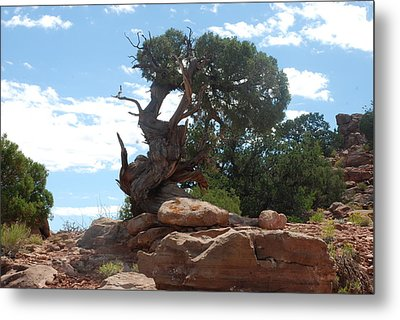 Metal Print featuring the photograph Pine Tree By The Canyon by Dany Lison