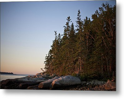 Pine Trees Along The Rocky Coastline Metal Print
