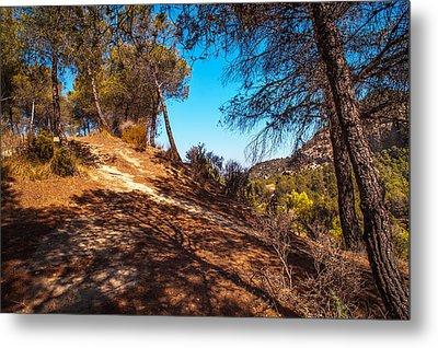 Pine Trees In El Chorro. Spain Metal Print by Jenny Rainbow