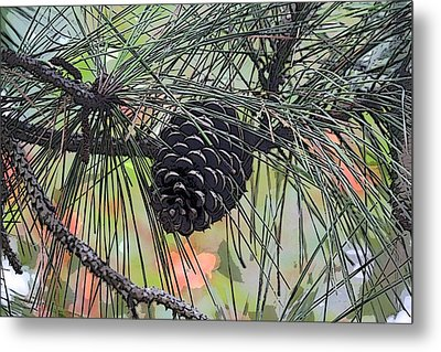 Metal Print featuring the photograph Pinecone by Donna  Smith