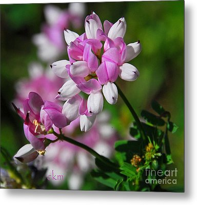Metal Print featuring the photograph Pink And White by Cindy Manero