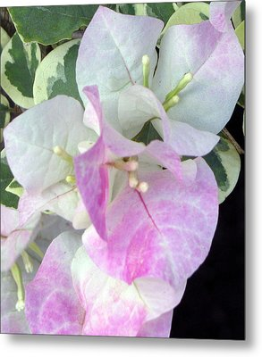 Metal Print featuring the photograph Pink And White Surprise by Debi Singer