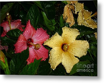 Metal Print featuring the photograph Pink And Yellow Hibiscus After The Rain by Renee Trenholm