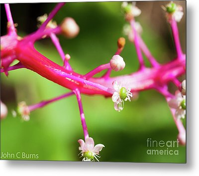 Metal Print featuring the photograph Pink Buds by John Burns