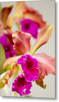 Pink Cattalaya Orchid Metal Print by Ron Dahlquist