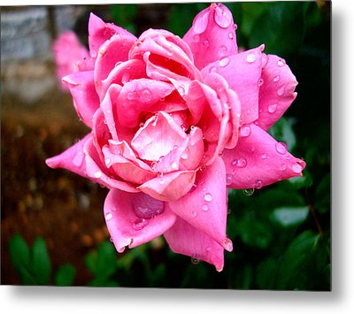 Pink Double Knockout Rose Metal Print by David G Paul