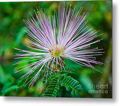 Metal Print featuring the photograph Pink Expression by Eve Spring
