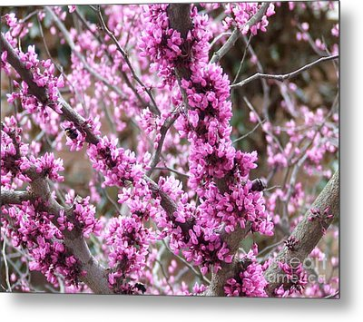 Metal Print featuring the photograph Pink Flower by Andrea Anderegg