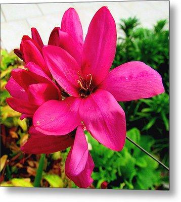 Pink Flower Metal Print by Joyce Woodhouse