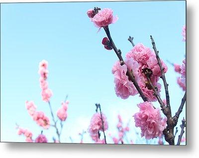 Pink Flowers Metal Print by Allen Jiang