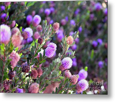 Metal Print featuring the photograph Pink Fuzzy Balls by Clayton Bruster