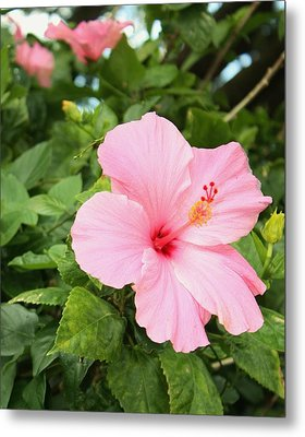 Metal Print featuring the photograph Pink Hibiscus by Craig Wood
