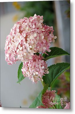 Metal Print featuring the photograph Pink Hydrangea by France Laliberte