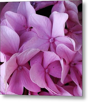 Pink Hydrangea Up Close Metal Print by Bruce Bley