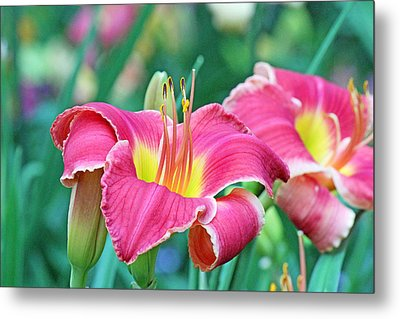 Pink Lilies Metal Print by Becky Lodes