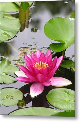 Pink Lily Flower  Metal Print by Diane Greco-Lesser
