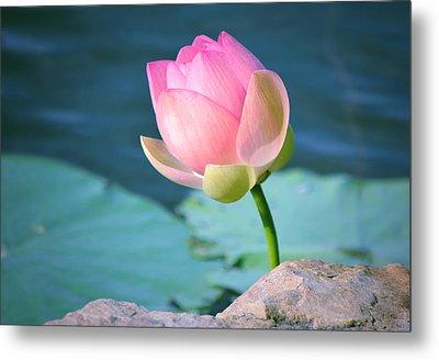 Pink Lotus 2 Metal Print by Julie Palencia