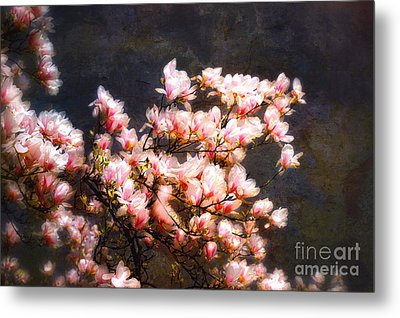 Pink Magnolias Metal Print by Elaine Manley