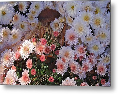 Metal Print featuring the photograph Pink Mum by Joseph Yarbrough