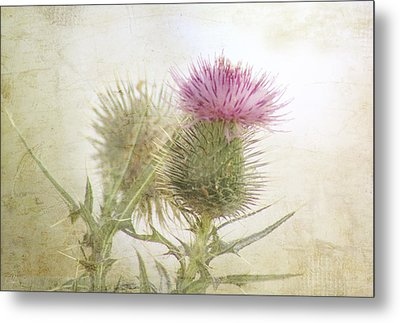 Pink On Green Metal Print by Margaret Hormann Bfa