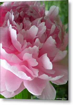 Pink Peony Metal Print by Penny Hunt