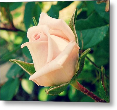 Pink Perfection Metal Print by Robin Dickinson