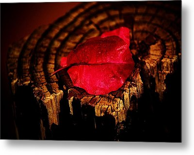 Metal Print featuring the photograph Pink Petal by Jessica Shelton