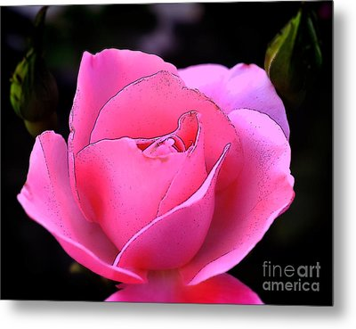 Metal Print featuring the photograph Pink Rose Day by Clayton Bruster