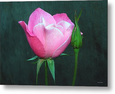 Metal Print featuring the photograph Pink Rose by George Bostian