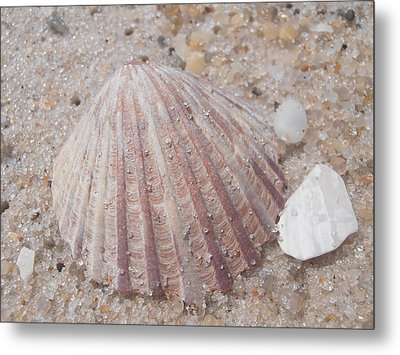 Pink Scallop Shell Metal Print by Kimberly Perry