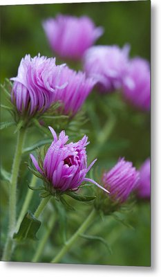 Metal Print featuring the photograph Pink Swirls by Carrie Cranwill