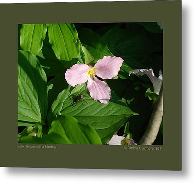 Metal Print featuring the photograph Pink Trillium Witha Stinkbug by Patricia Overmoyer