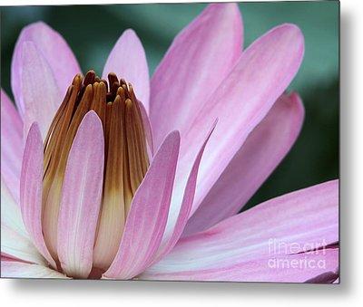 Pink Water Lily Macro Metal Print by Sabrina L Ryan