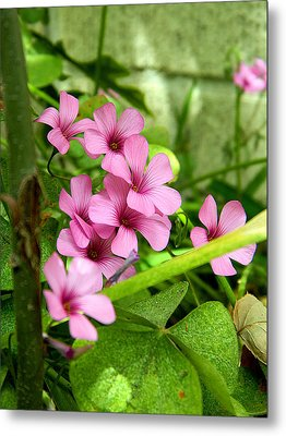 Metal Print featuring the photograph Pink Wild Flowers by Ester  Rogers
