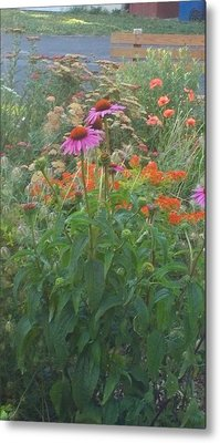 Pinkviolet Dasies With Garden Flowers Metal Print by Thelma Harcum